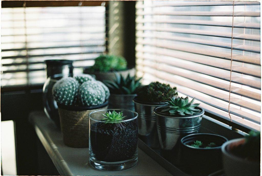 Biljke pored prozora