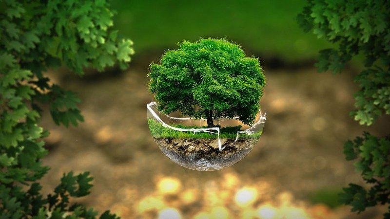 drvo-kao-prvo